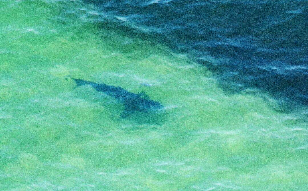 Can Swimmers and Sharks Coexist? Smarter Maps Might Help